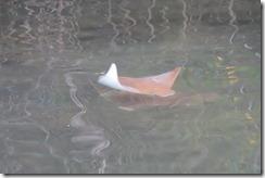 Lone ray