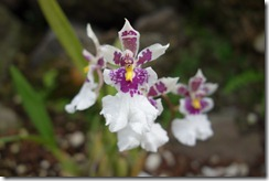 Stunning orchids in all shapes, sizes & colours