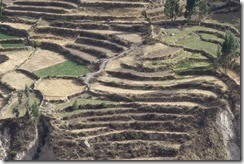 Original Inca terraces