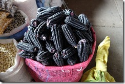 Purple corn - used to make a drink called Chicha Morada