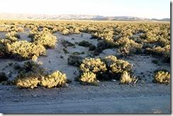 Scrubland scenery