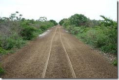 Heading through the Pantanal