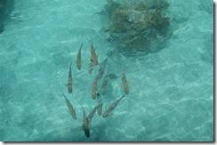 Fishes feeding