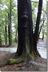 The Ent tree