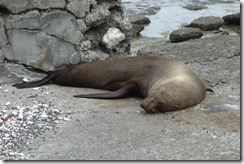 Yet another seal