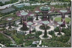 SuperTrees from the Gardens by the Bay