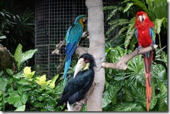 Exotic birds at Blanco Museum