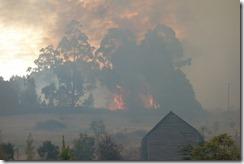 Raging bushfire