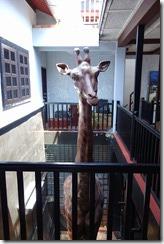 A giraffe on board