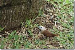 Interestly coloured bird