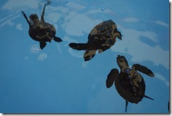 Baby turtles born last night