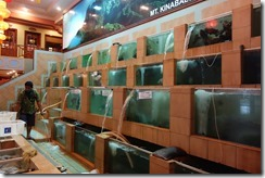 Fish in tanks waiting to be picked in a Chinese restaurant