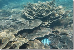 Amazing coral formations