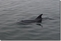 Its always a good day when you see a dolphin!
