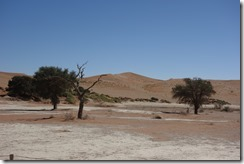 Sossusvlei - at least some of the trees are alive