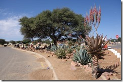 A snapshot of Africa - strange plants, an Acacia tree and folk selling stuff by the side of the road
