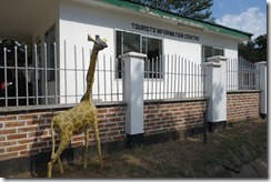 Well the giraffe looks interested