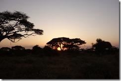 African sunset behind an Acacia tree