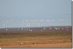 Flamigoes on Lake Manyara