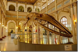 Having a whale of a time in the Natural History museum