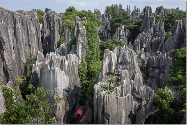 Stone Forest view