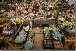 The closest to flowers in the flower market