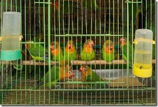 Poor little birdies
