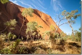 Vegetation around the steep sides of Uluru