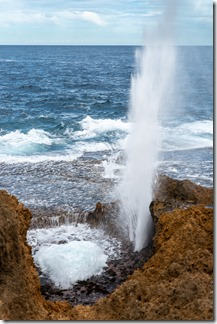 A good show at the blowhole