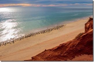 Gulls & Cormorants lined up on the beach