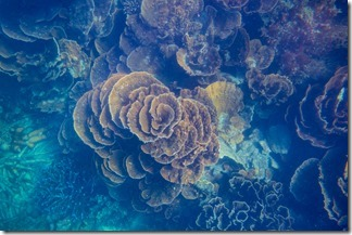 Incredible patterns in the coral