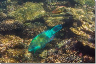 Parrot fish and friends