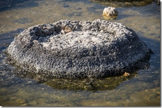 An active stromotolite