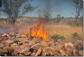 The bush fire was of interest to nobody but us