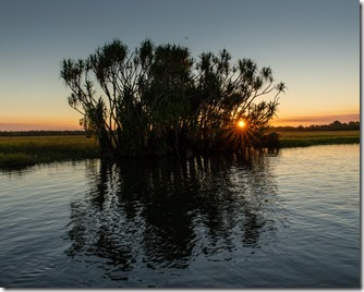 Sunset behind a Pandanus tree - a very NT image
