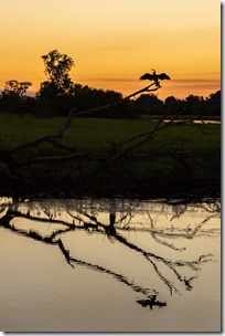 A darter salutes us as the sun disappears