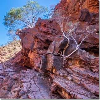 We'll be sorry to leave the rocks and gorges of Karijini