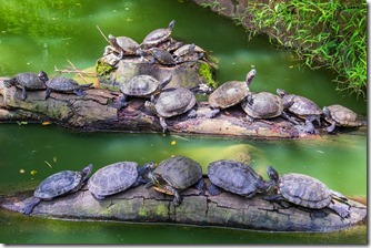 Many turtles